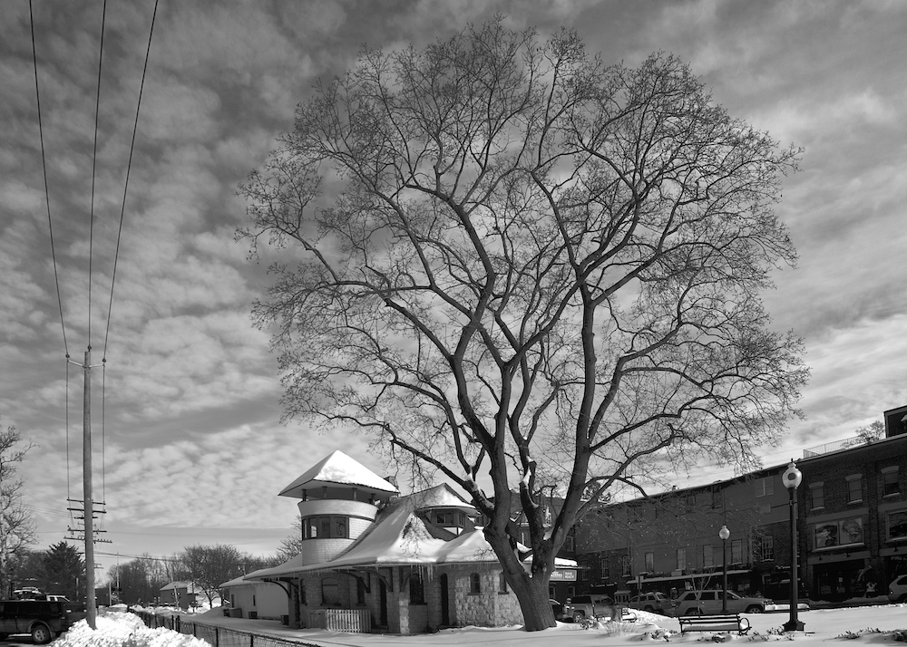 Name:  Warwick Station, Tree and Snow.jpg